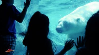 Children Looking at Polar Bear Underwater